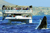 Cabo Whale Watching Excursion