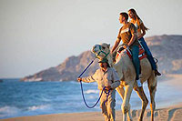 Camel Riding Tour Cabo San Lucas