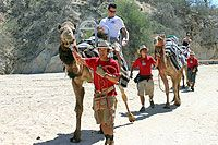 Cabo San Lucas Camel Riding Excursion