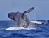Whale Watching Express Tour