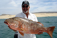 Cabo Fishing - Light Tackle