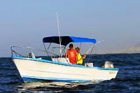 Cabo Panga Fishing Tour