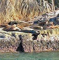 Sea Lion Colony, Cabo San Lucas