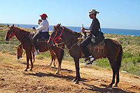 Cabo Horseback Riding Tour