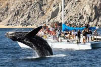 Whale Watching Catamaran Cabo