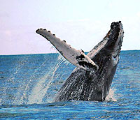 Cabo San Lucas Whale Watching Tour