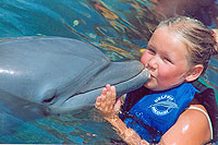 San Jose del Cabo - Dolphin Encounter