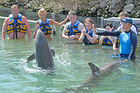 Cabo Dolphin Trainer and Swim Excursion