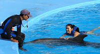 Dolphin Trainer Cabo