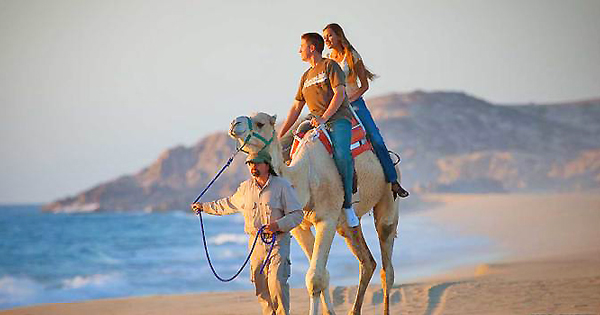 Cabo San Lucas Camel Riding Safari A Unique Excursion