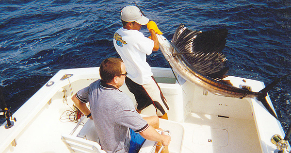 Sportfishing and deep sea fishing charters cabo san lucas for Cabo fishing seasons