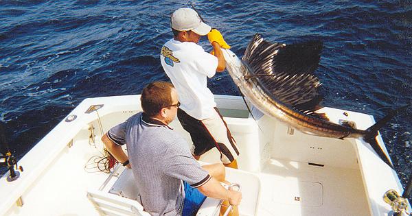 Sportfishing and deep sea fishing charters cabo san lucas for Cabo san lucas fishing season